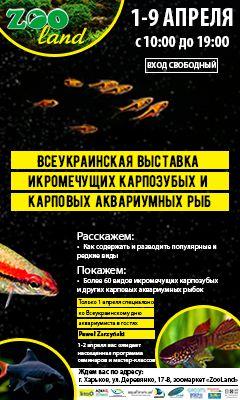 Выставка икромечущих карпозубых и карповых аквариумных рыб