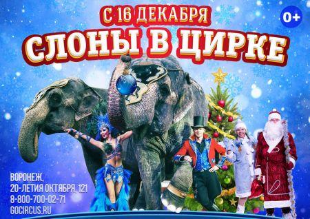 Слоны в Цирке! Воронежский цирк